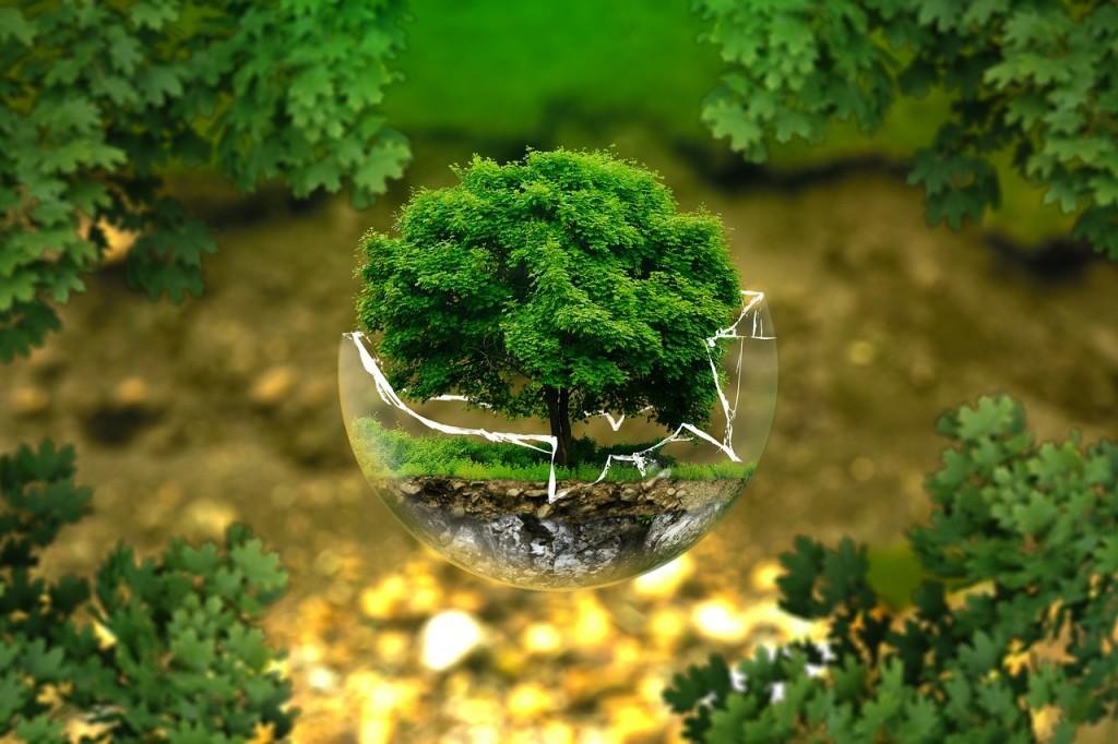 Preservar o meio ambiente é assegurar a vida de milhões de pessoas (Créditos Pixabay)