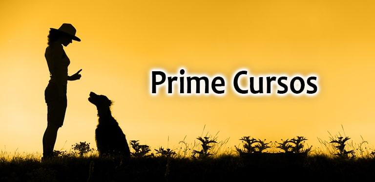 curso de adestramento canino
